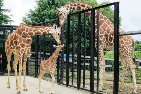 福山市立動物園 イメージ